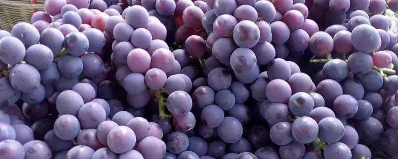 紫色葡萄汁怎么洗掉