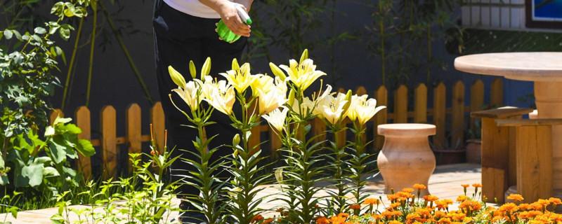 「自来水」自来水能浇花吗