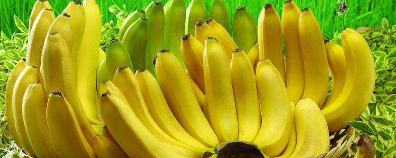 自制香蕉酒不加酒