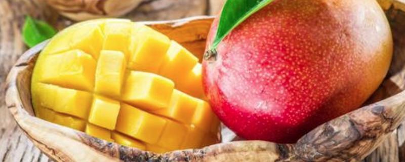 「芒果」芒果不能和什么一起吃